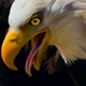 Eagle Clan